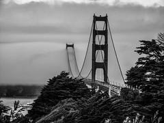 Golden Gate II (pooroldtim) Tags: california bridge trees blackandwhite bw mist fog clouds canon boats goldengatebridge goldengate canonpowershotg10