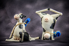19/365: Yoga Cows (KristyR929) Tags: two yoga cows 365 project365 365daysproject msh1113 nikond7100 msh11131
