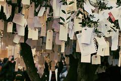 (S.y. Photography) Tags: tree 35mm nikon market catalonia medieval wishes vic catalunya wish wishtree mercatmedieval d3000