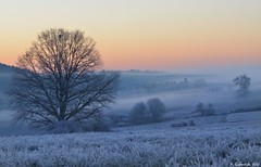 das Land erwacht (H. Eisenreich) Tags: morning blue sky mist cold tree fog bayern bavaria twilight nikon frost mood moody nebel hans himmel upper hour kalt morgen baum oberpfalz naturpark blaue eiskalt frühnebel stunde berghausen palatinate frühmorgens hohenburg sonnaufgang eisenreich hirschwald mygearandme mygearandmepremium mygearandmebronze mygearandmesilver mygearandmegold mygearandmeplatinum mygearandmediamond