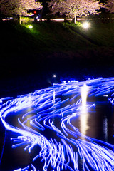 "_DSC8190.jpg (d3_plus) Tags: japan night cherry star nikon 桜 cherryblossom 日本 sakura nikkor 夜景 j1 izu ""night kawazu kawadu ホンダ 夜桜 伊豆 minamiizu 河津 blossoms"" ニコン 河津桜 blossom"" 南伊豆 nikon1 shoot"" beat"" 南伊豆町 cho"" ""shooting kawadusakura ""honda 青野川 beat660 nikon1j1 1nikkor ホンダ・ビート 1nikkor185mmf18 nikon1j3 1nikkor18mmf18 1nikkorvr10100mmf456 ""minamiizu aonogawa 夜桜流れ星 夜桜☆流れ星"