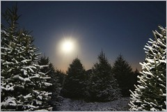 Moon, Mars and Spring Snowfall (LeisurelyScientist.com) Tags: morning trees mars moon snow canon early timelapse spring earth astrophotography planet april astronomy nightsky snowfall setting moonset 2014 samyang tomwildoner