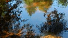 Coloured Summer Afternoon II (offroadsound) Tags: reflection river fluss waterreflection fleuve summerafternoon imfluss oertze südheide meanderingintime