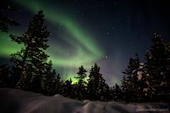IMG_2925 (F@bione©) Tags: lapponia lapland marzo 2017 husky aurora boreale northenlight circolo polare artico rovagnemi finalndia finland