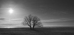 The Twins - Black and White Version (Budoka Photography) Tags: tree serene sky nature landscape sun shadow blackandwhitephotos blackandwhite blackwhite bw monochrome tranquility noiretblanc outdoor seaside 7dwf