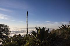 IMG_5947 (Cris_Pliego) Tags: mex querétaro sierra gorda mexico nature bucarelli mountains mision