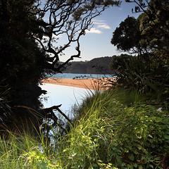 Langs Beach - Northland NZ (angus clyne) Tags: beach new zealand summer bush flax stream sand swim pohutukawa tree langs northland cove road mangawhai heads