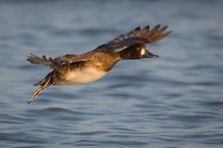 Ducky Flyby