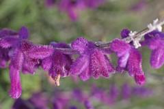 D174727A (RobHelfman) Tags: losangeles flowers kennethhahnstaterecreationarea