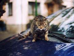 Street cat 179 (Yalitas) Tags: cat cats кот кошка котка kedi chat feline kat katze katzen kot kotka pet felino kottur katte kass kitty gato kocka gatta katzchen streetcat canon