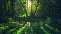 Sweet Afton (Ted Gore Photography) Tags: olympic national park forest green rainforest washington