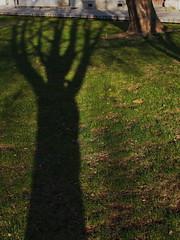 árnyéka van (> akela <) Tags: nagybánya