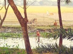 গ্রাম বাংলা (ferdoush007) Tags: beautiful bangladesh natural beauty bd nice secene গ্রাম বাংলা বাংলার সৌন্দর্য আমার বাংলাদেশ wow capture photo বাংলাদেশী bangladeshi nature child farmer ধানক্ষেত