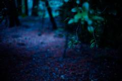 yabu (N.sino) Tags: m9 nokton50mmf11 dusk inogashira kichijoji 井の頭公園 吉祥寺 藪 夕暮れ時
