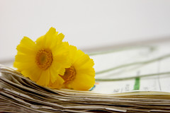 Wildflowers on a deadline (lynda.tee) Tags: old yellow notebook pages wildflowers cuu