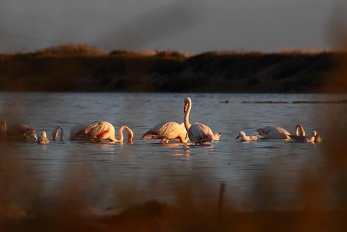 Pink Flamingos 1