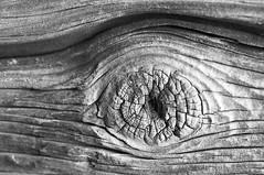 Holzauge (Px4u by Team Cu29) Tags: wood ast holz bough holzauge