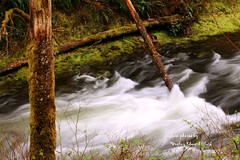 100 (Photos by Wesley Edward Clark) Tags: oregon whitewater buttecreek scottsmills mollala buttecreekfalls