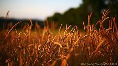 Meadow Garden - Donegal.