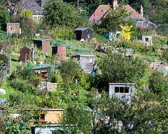 The Allotment (margaretsdad) Tags: urban plants gardens garden landscape scotland edinburgh unitedkingdom shed greenhouse gb greenery allotment morningside midlothian scottbarron d3100