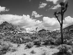 (dkrish) Tags: california olympus zuiko evolt joshuatreenationalpark e330 1454mmf2835