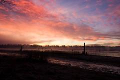 Daybreak (Prestidigitizer) Tags: cloud mist sunrise river fraser posts pillars mygearandme mygearandmepremium mygearandmebronze mygearandmesilver ringexcellence sigma816mm pentaxk3