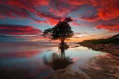 ...Burning Tree... (Farizun Amrod Saad) Tags: travel sunset seascape beach miri burning sarawak malaysia borneo hoyacpl adoberaw singhrayrgnd canon70d photoshopcs6 farizunamrod