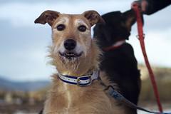 dog puppy photography photo video colorado hound lifestyle canine beaty adventure editorial doggy leash collar pooch estespark kjb kevinbeaty kevinjbeaty