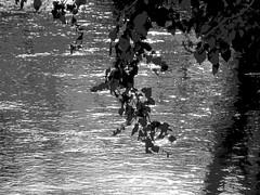 Licht und Schatten (stadtbraut) Tags: light shadow sun white abstract black reflection nature sunshine backlight contrast canon river photography licht daylight photo wasser paint fotografie fotografieren shadows quality natur picture right direction paintingwithlight mirage draw tageslicht fluss sonne kontrast farbe reflexion schatten spiegelung schwarz feature stimmung malen farben abstrakt gegenlicht canonpowershot sonnenschein richtung temperatur weis lichtundschatten g16 aufnahme richtig wasserspiegelung qualitt schwarzweis alongtheriver proberty gegenlichtaufnahme helligkeit eigenschaft lightanshadow backlightshot mitlichtmalen canonpowershotg16