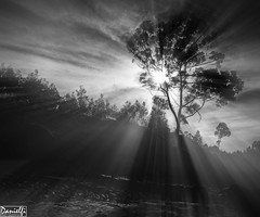 b&w sunlight (danielfi) Tags: bw sun tree sol beach contraluz arbol asturias playa bn asturies