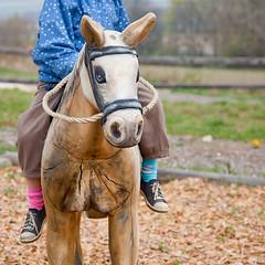 (Tease 2 0 1 0) Tags: horse colors socks canon square colours different 11 kind socken pferd squared farben quadrat quadratisch lipizzaner bsquare heldenberg 24105mm holzpferd unterschiedliche eos5dmkii