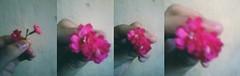 (VinnyOlivers) Tags: life flores love peace amor natureza flor paz mini vida diva flowes