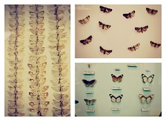 Butterflies @ The Horniman Museum London (alicehopedenny) Tags: england london museum butterfly pretty pattern colours pastel butterflies insects horniman