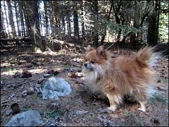 samedi : la clairière au bois des Fraux