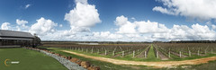 Watershed Winery, Margret River (Scott Jon Photography) Tags: rural vineyard margretriver watershedwinery