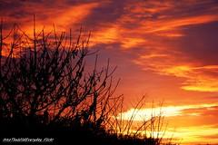 fire sky (intothewildeveryday) Tags: trees sunset red sky orange cloud sun sunrise rouge fire soleil coucher sunny ombre bleu ciel nuage beau feu couchant beautifull lever levant sunhine