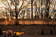 310113_001   sunset behind israelitic cemetry (the_apex_archive) Tags: vienna wien trees sunset cemetry friedhof graveyard wall austria mural sonnenuntergang apex jewish jews tombstones bäume mauer juden jewishgraveyard grabsteine historisch jüdisch jüdischer historischer jewishcemetry 31013 friedhofsmauer begräbnisstätte israelitisch israelitischerfriedhof jüdischerfriedhofwähring jewsinvienna jewishcemetrywähring judeninwien israelitischerfriedhofwähring