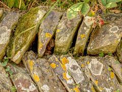 Life in a Cornish wall