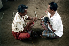 26-145 (ndpa / s. lundeen, archivist) Tags: people bali man color men bird film birds 35mm indonesia sitting 26 nick knife cock arena weapon southpacific handlers rooster cocks blade 1970s 1972 seated handler roosters indonesian cockfight gamecock gamecocks balinese dewolf oceania pacificislands cockfighting nickdewolf photographbynickdewolf cockfightingarena reel26 cockfightarena