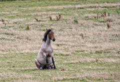 buddha horse [explored] (carol_malky) Tags: horse unusual explored buddhaposition
