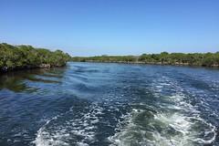 32. Mangroves (Misty Garrick) Tags: johnpennekamp johnpennekampreef johnpennekampcoralreefstatepark coralreef florida keylargofl keylargo floridakeys atlanticocean