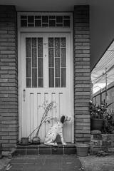 064 - marzo 4 (Galo Naranjo) Tags: dálmata dalmatian perro puerta dog door