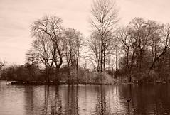 The Lake (rgrant_97) Tags: munich münchen germany detschland olympus trip 35 olympustrip35 film