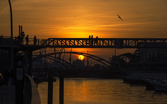 Sunset in Hamburg (Fil.ippo) Tags: sunset tramonto light hamburg germany colors romantic d610 birds filippo filippobianchi harbour hafen sun sole amburgo