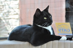 Jus' Chillin (cox-on-the-box **glad its Spring!**) Tags: mini tuxedo bestofcats kittyschoice catmoments
