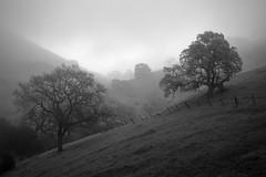 Evergreen Fog 4 (StefanB) Tags: california light bw mist tree monochrome fog landscape outdoor sanjose evergreen geotag 2013 em5 1235mm flvonmirikr