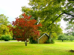 The House and Maple Tree (Stanley Zimny) Tags: red house tree season spring maple ringwood