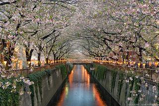 Along The Meguro River - Tokyo, Japan