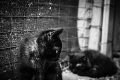 .::. (sk0o) Tags: cats cat luca gatti ivrea luglio mici 2013 lucaschinetti httpsititfacebookcompageseporedianimaliilgattilediivrea192712738751 schinetti