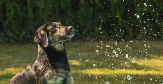 [Explore] Daily Dog 2013 208: Magic Saturday